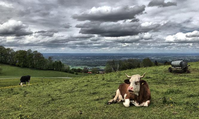 Aussicht von Steinkirchen mit Kuh