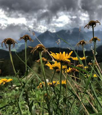 Spätsommerliche Blumenpracht