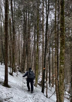 Aufstieg durch den Bergwald