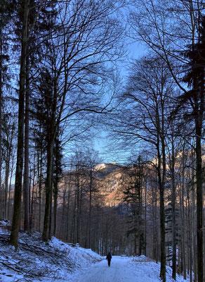 Auf dem Weg zwischen Hohenaschau und Schwarzenstein