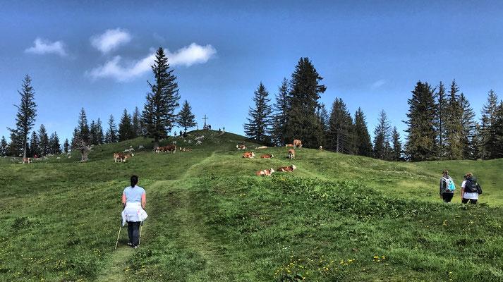 Die letzten Meter zum Farrenpoint Gipfel