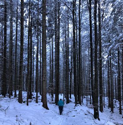 Durch den Winterwald bergauf