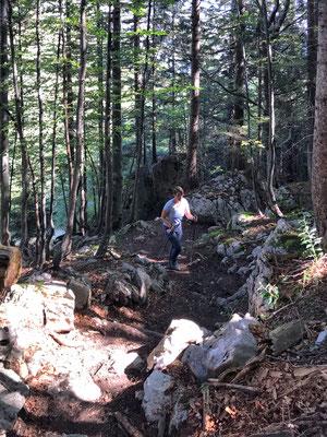 Bergauf durch den Bergwald