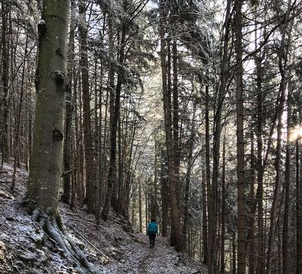 Aufstieg von Bayrischzell zur Alten Tanner-Alm