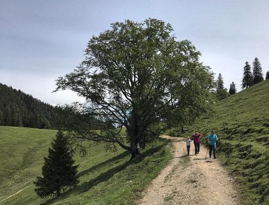 Auf dem Weg zum Mitterberg