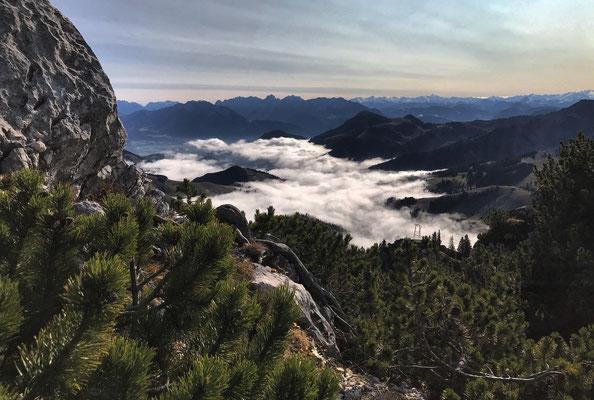 Latschen und Wolkenmeer am Lacherspitz-Gipfel
