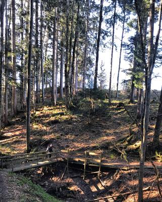Auf dem Waldweg unterhalb vom Durhamer Berg