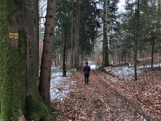 Auf der Wegführung des SalzAlpenSteigs im Wald bei Haslau