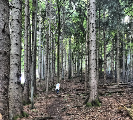 Durch den Bergwald in Richtung Doaglalm