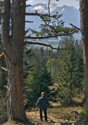 Abstieg vom Schwarzenberg