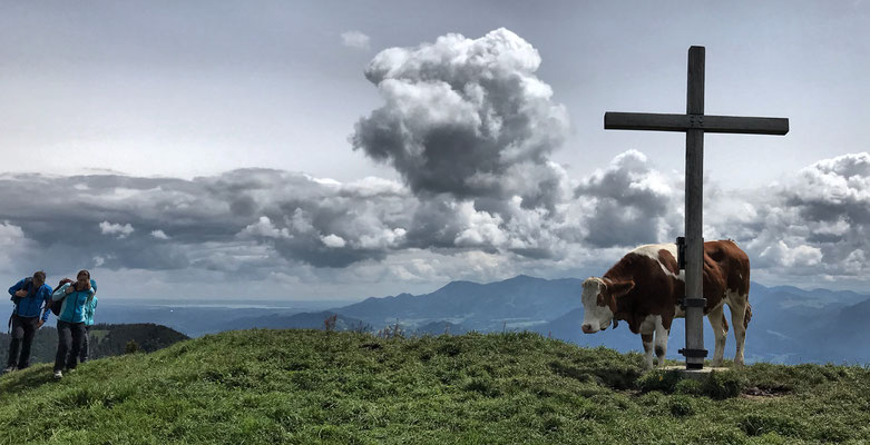 Mitterberg Gipfelkreuz mit Kuh