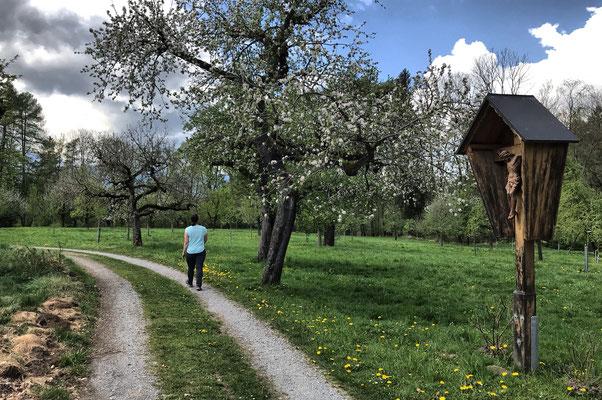 Obstbäume kurz nach Geiging