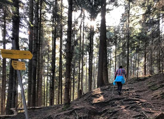 Durch den Bergwald auf den Schwarzenberg