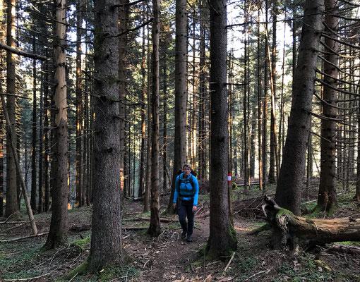 Bergauf durch den Wald Richtung Grafenherberg