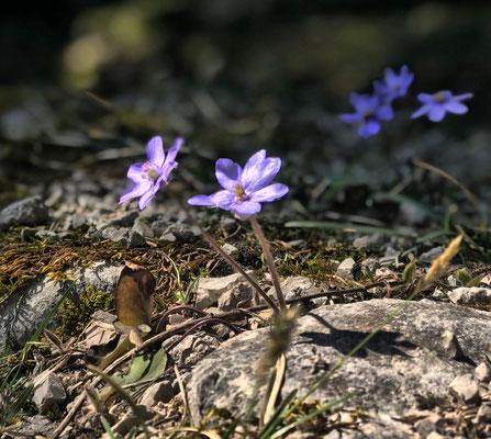 Frühling an der Kesselalm