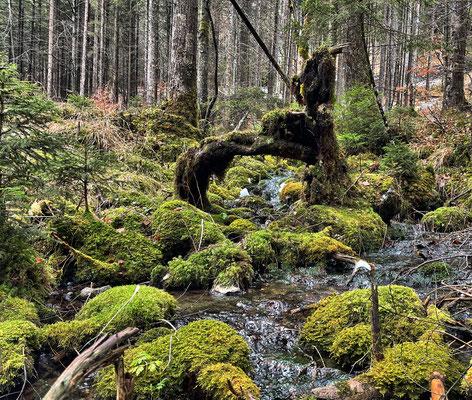 Verwunschene Mooslandschaft am Mühlbach