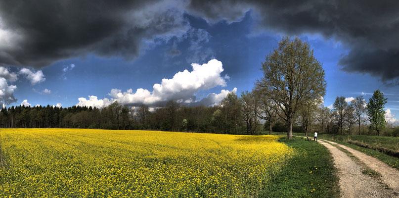 Rapsfeld und Regenwolken