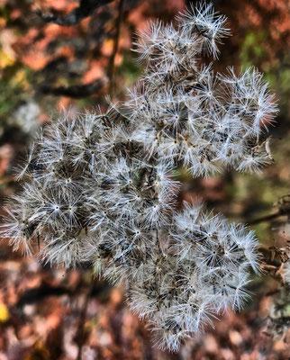 Herbstliche Flora