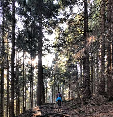 Aufstieg zum Schwarzenberg