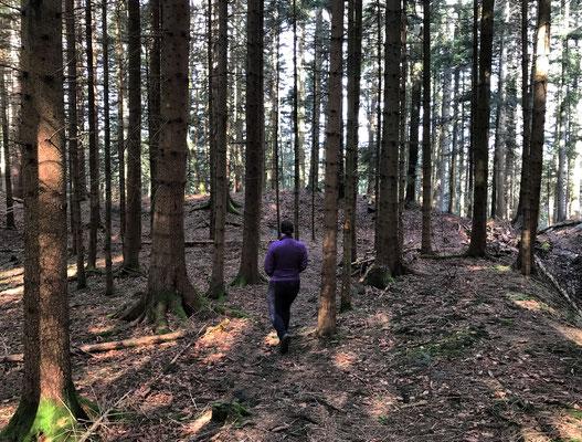 Durch den Bergwald von der Tregler Alm bergab