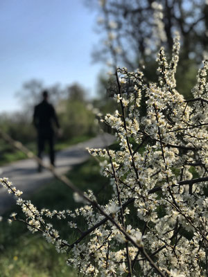 Frühling am Mangfalldamm