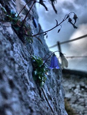 Blumen im Fels