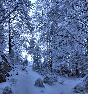 Winter Wonderland oberhalb der steinernen Stiege