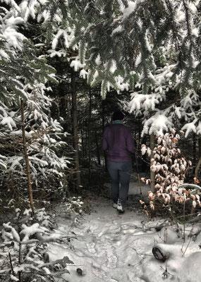 Durch den Wald zur Dandlbergalm