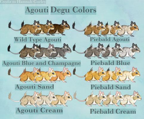 Degu Color Chart Agouti, Blau Blue, Sand, Cream