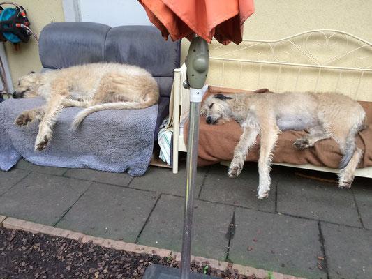 Die Läufigkeit macht mich so müde und Sunny schläft eine Runde mit.