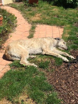 Manchmal liebe ich die Sonne .... auch bei 30 Grad im Schatten ..... Sonnenbad nehmen ... :-)