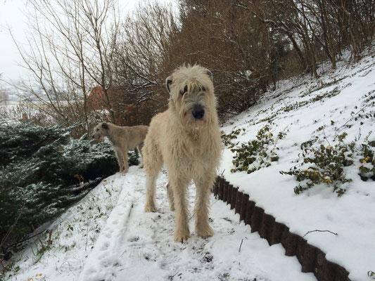 Ein bisserl Schnee und schon ist Sunny im Paradies