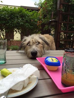 Und wenn ich nun den Kopf auf den Tisch lege und gaaanz süüß dreinschaue ... krieg ich dann was?