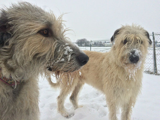 Naomy versteht gar nicht wenn Sunny zu anderen Hunden ein Rüpel sein mag.
