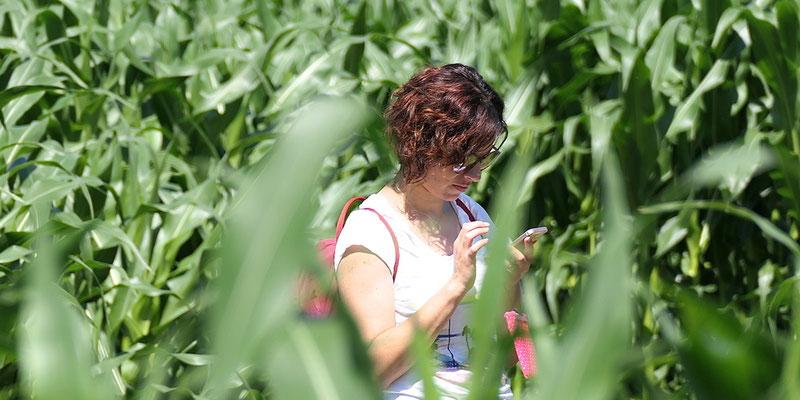 Maislabyrinth Bodensee