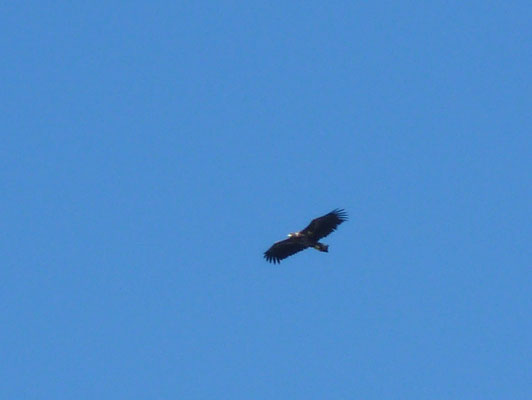 Sea Eagle on Sandhamn