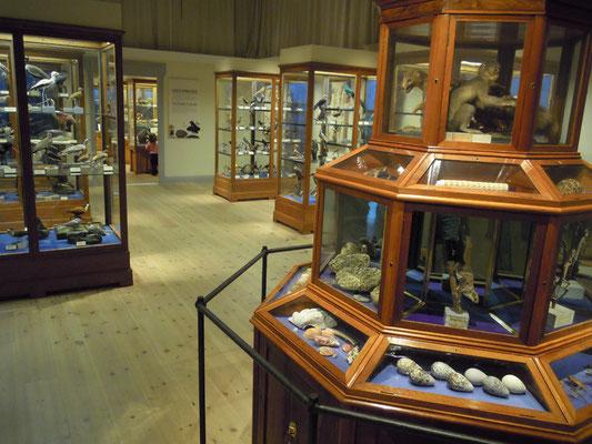 at Naturhistoriska riksmuseet