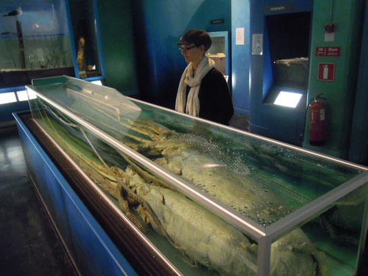 the giant giant giant squid at Naturhistoriska riksmuseet