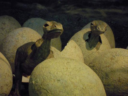 på Naturhistoriska riksmuseet