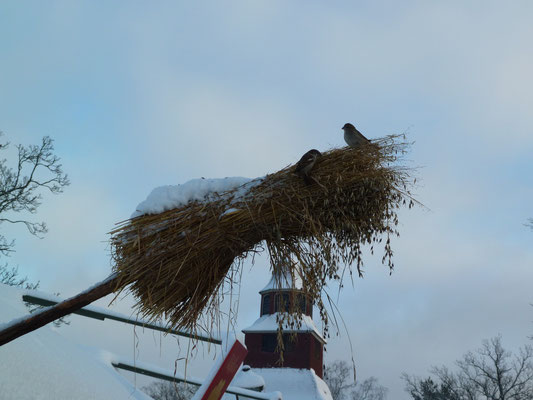 Christmas market in Skansen - the Swedish way of winter bird feeding
