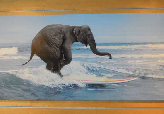 surfing elephant at Arlanda airport