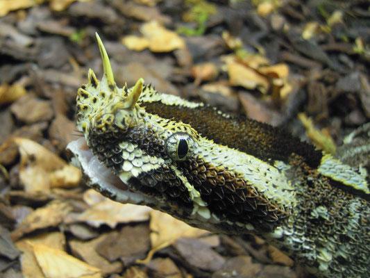snake at Skansen