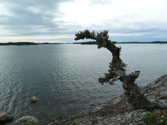 at Sandemar naturreservat south of Stockholm
