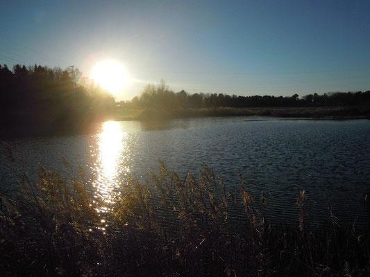 Norra Djurgården