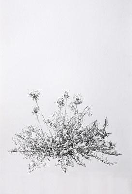 aigrettes, dans un souffle, s'essaiment - mars17 - encre sur papier Arches 300g, 56x38,5cm