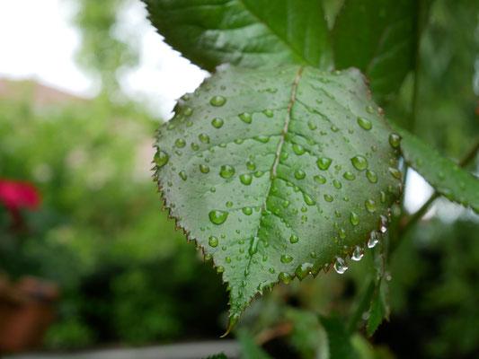 il pleut et c'est bon pour le jardin !