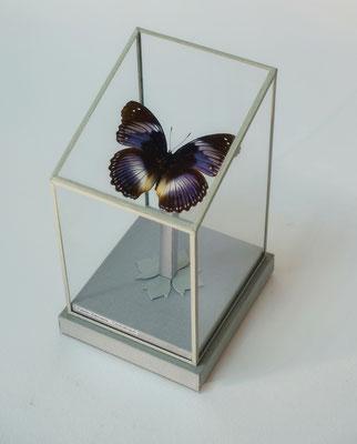 """""""Papillon"""" Boîte soclée."""
