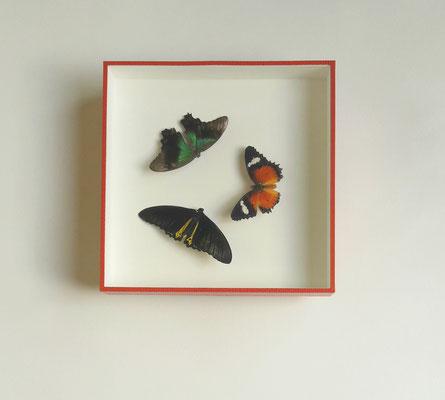 Papillons - Boîte en profondeur avec finition sous-verre papier.