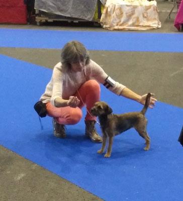 Border Terrier Mira IHA Genf