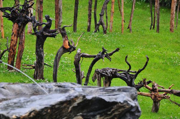 Grindelwald 2009 - Entwurzelt - Ulla & Rolf Klaeger